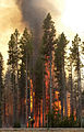 Backburn (20144396043).jpg