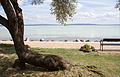 Balatonakali - beach-2.jpg