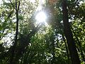 Banjička šuma 005.jpg