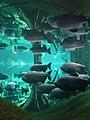 Barcelona Cosmocaixa Aquarium 02.jpg