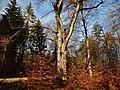Baum im Naturpark Schönbuch - panoramio.jpg