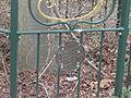 Beatrix tree 1988 - 3.JPG