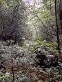 Beauchamp Falls - panoramio.jpg