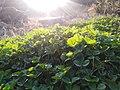 Beautiful sunrays on grasses.jpg