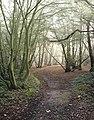 Beckney Wood - geograph.org.uk - 583810.jpg