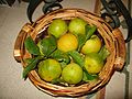 Bergamotti (Bergamot fruits) - (1).jpg