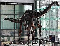 Berlin Diplodocus.jpg