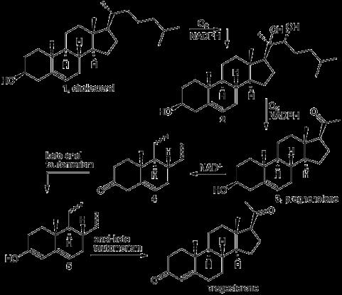 sintesi steroidi surrenalici