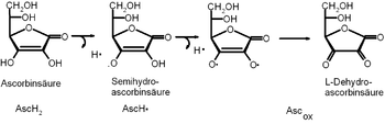 radical reaction of ascorbic acid