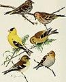 Bird-lore (1910) (14755084112).jpg