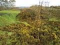 Blackburn, UK - panoramio (22).jpg