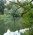 Blick auf die Regnitz - panoramio.jpg