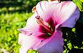 Blommor (9346316840).jpg