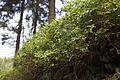 Blueberries (MGK18115).jpg