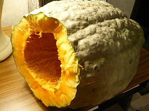 Winter squash - A blue hubbard squash (a variety of Cucurbita maxima) showing bright orange flesh