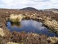 Bog pool, Scawd Law - geograph.org.uk - 153880.jpg