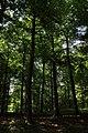 Bois du Pottelberg - Pottelbergbos 08.jpg