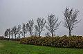 Bomengroep om strandje put van Nederhorst 01.jpg