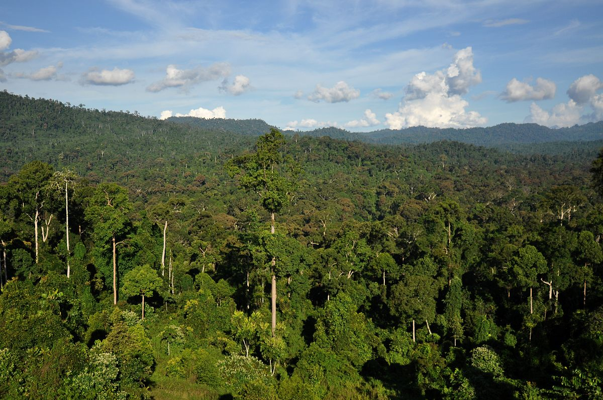 tropical rainforest Found in the tropical climate near the equator, rain forests make up six percent of the earth's land surface, but produce 40 percent of its oxygen.