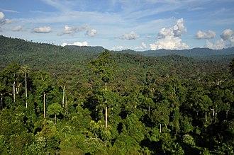 Tropical forest - Borneo rainforest
