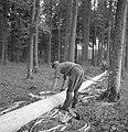 Bosbewerking, arbeiders, boomstammen, gereedschappen, Bestanddeelnr 251-7933.jpg