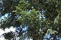 BotGardenFomin DSC 0122-1.jpg