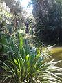 Botanical garden in Algiers.jpg