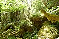 Boulder field in the forest - geograph.org.uk - 191774.jpg