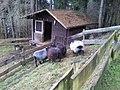 Brabandstaller Weg Ennepetal, 25.12.13 - panoramio (10).jpg