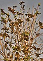 Branches & falling leaves I IMG 6078.jpg