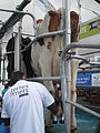 Brest 2012 - Terres et mers08.JPG