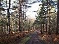 Bridleway from Pyestock Hill to Fleet Pond - geograph.org.uk - 1614652.jpg