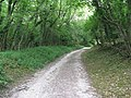 Bridleway in Bignortail Wood - geograph.org.uk - 1406613.jpg
