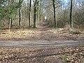 Bridleway junction in Knowle Wood - geograph.org.uk - 1777907.jpg
