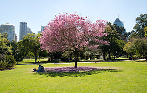 Brisbane City Botanic Gardens lawn