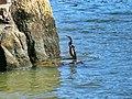 Brisbane Kangaroo Point - panoramio (3).jpg
