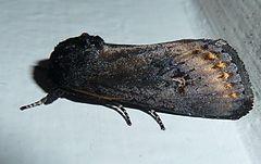 240px brithys crini, pretoria