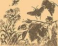 Brockhaus-Efron Pentatomidae.jpg