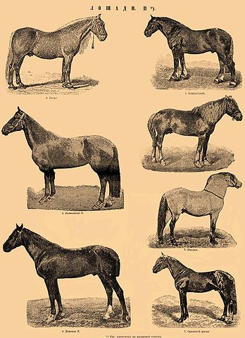 Cheval tout court dans CHEVAL 348px-Brockhaus_and_Efron_Encyclopedic_Dictionary_b35_045-0