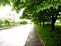 Brody, Lviv Oblast, Ukraine - panoramio (276).jpg