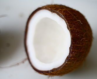 Coconut - A coconut in cross-section