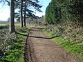 Bromesberrow Estate Track - 2 - geograph.org.uk - 733329.jpg