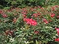 Brooklyn Botanic Garden 4.JPG
