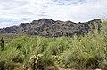 Butcher Jones Trail to Pinter's Point Loop, Tonto National Park, Saguaro Lake, Ft. McDowell, AZ - panoramio (89).jpg