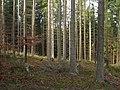 Butorza forest.jpg
