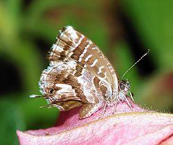 Butterfly August 2007-2.jpg