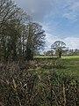 By Socken Wood, Rowley - geograph.org.uk - 674236.jpg