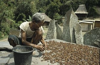 Coffee production in Indonesia - An old man is peeling coffee near megalithic stones at Bena, Ngada, Flores