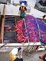 CSIRO ScienceImage 3691 Fishermen haul a catch of orange roughy aboard a fishing vessel.jpg