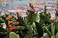 Cactus (15745040761).jpg